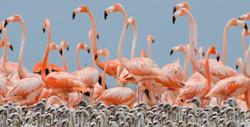 flamingo-babies_edited.jpg