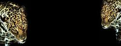 afrika bg 19.jpg
