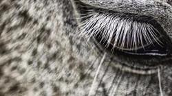 one_eyeland_rapa_das_bestas_by_rodrigo_lima_71782_edited.jpg