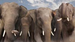 Beautiful-animals-photographu-stumbleupon-24 - Copy_edited.jpg