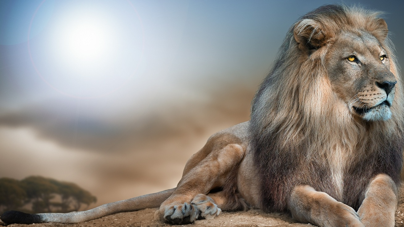 King-of-Beasts-Lion.jpg