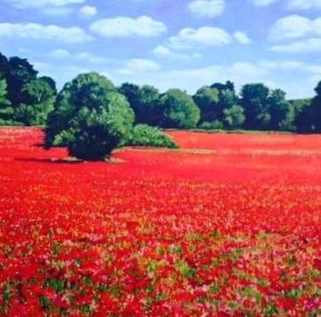 Claires poppyfield.jpg