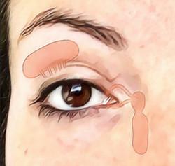Anatomie des voies lacrymales