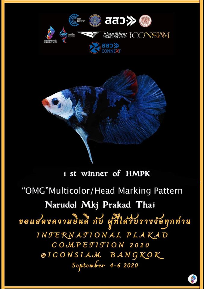 "1st Winner of HMPK ""OMG"" Multi-color/Head Marking Pattern"