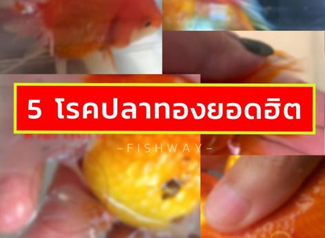 5 โรคปลาทองยอดฮิต