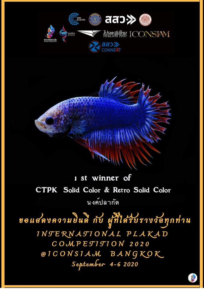 1st Winner of CTPK Solid Color & Retro Solid Color