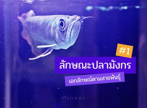 ลักษณะปลามังกร เอกลักษณ์ตามสายพันธุ์ #1