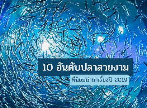 10 อันดับปลาสวยงามที่นิยมนำมาเลี้ยงปี 2019