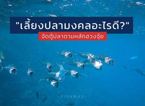 เลี้ยงปลามงคลตามหลักฮวงจุ้ย