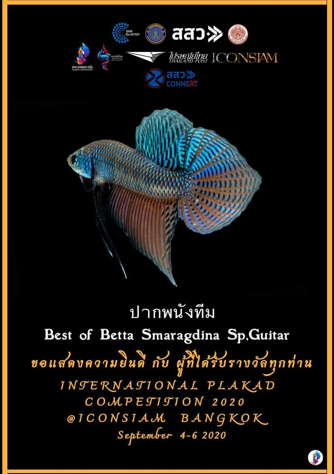Best of Betta Smaragdina Sp.Guitar