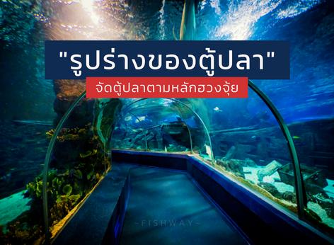 รูปร่างของตู้ปลาตามหลักฮวงจุ้ย