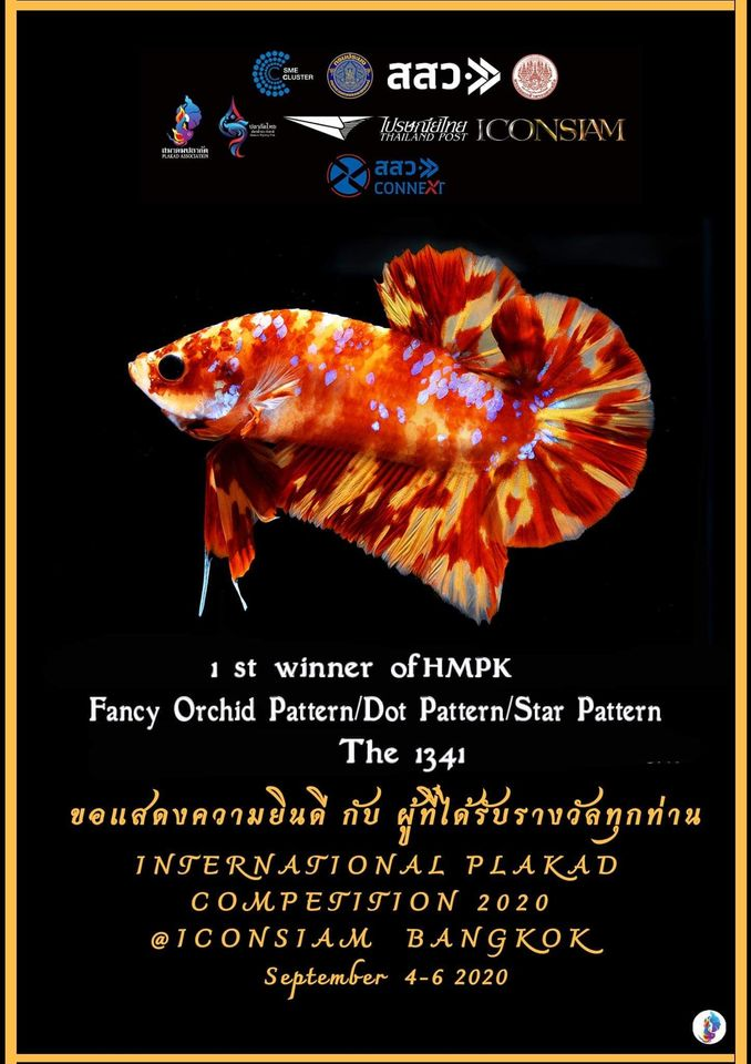 1st Winner of HMPK Fancy Orchid Pattern/Dot Pattern/Star Pattern