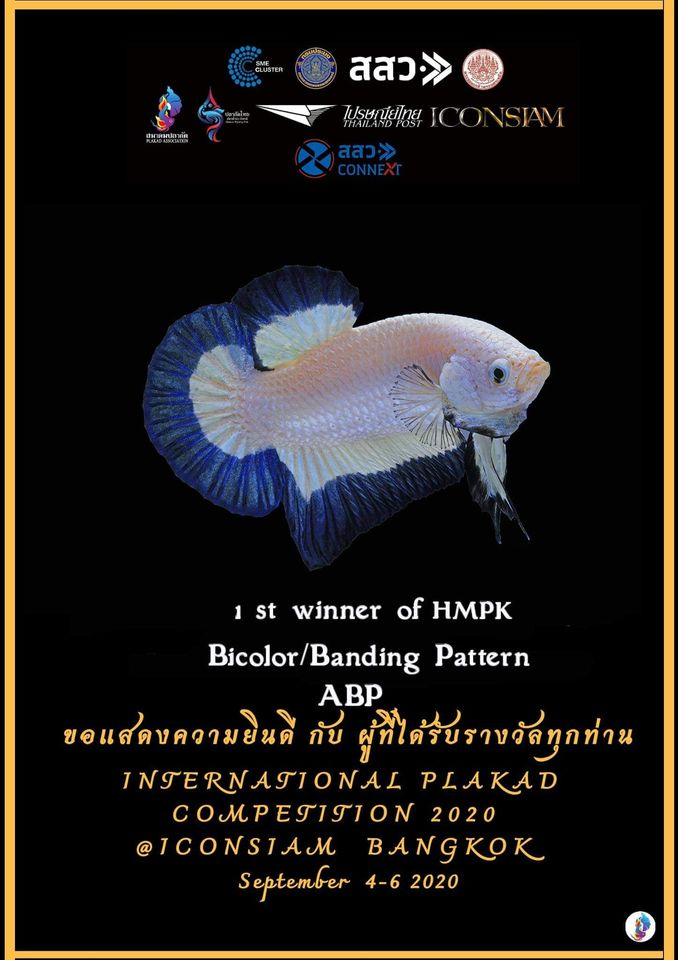 1st Winner of HMPK Bi-color/Banding Pattern