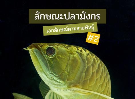 ลักษณะปลามังกร เอกลักษณ์ตามสายพันธุ์ #2