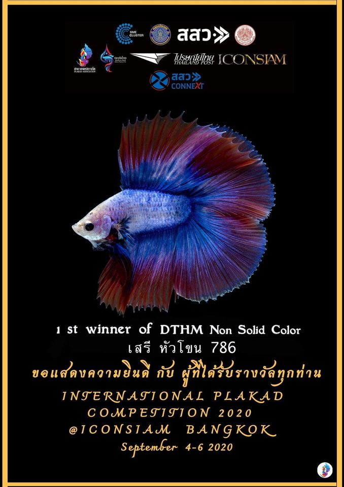 1st Winner of DTHM Non Solid Color