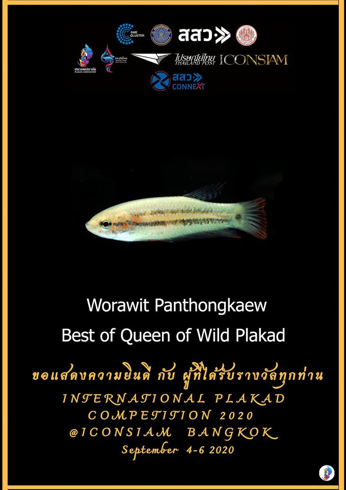 Best of Queen of Wild Plakad
