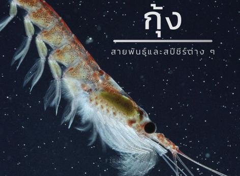 สายพันธุ์กุ้ง (Shrimp)
