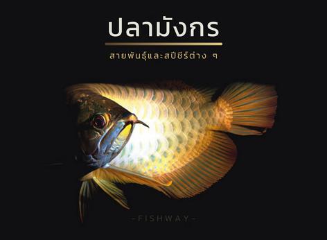 สายพันธุ์ปลามังกร (Arowana)
