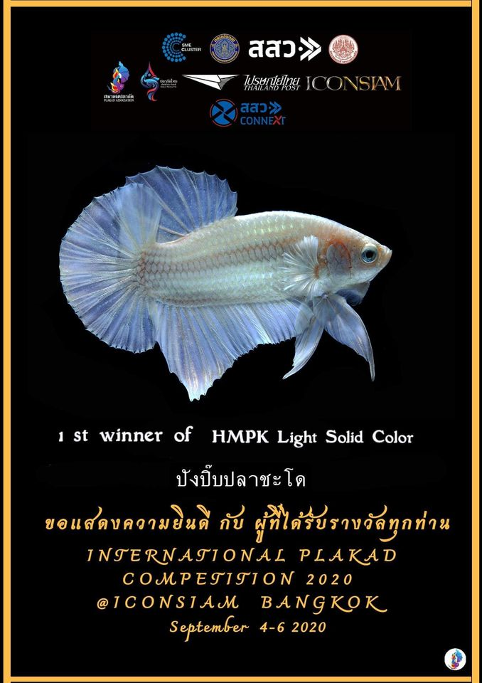 1st Winner of HMPK Light Solid Color