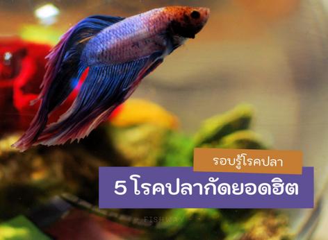 5 โรคปลากัดยอดฮิต