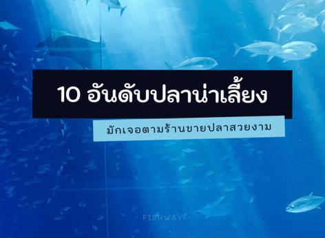10 อันดับปลาน่าเลี้ยงมักเจอตามร้านขายปลาสวยงาม