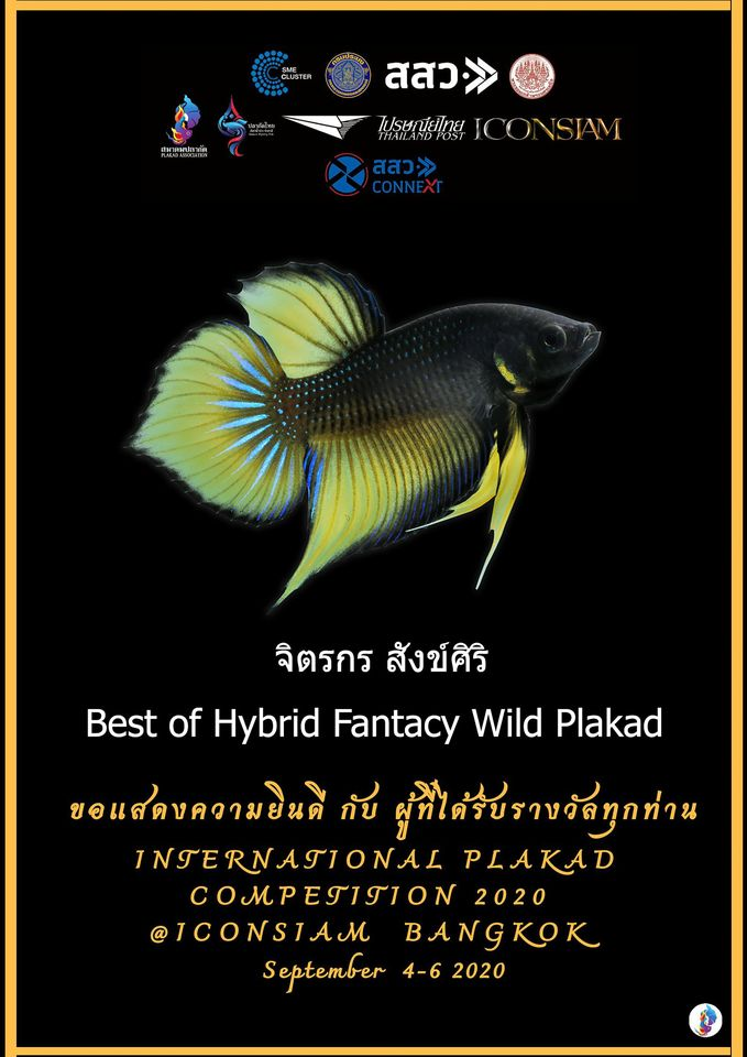 Best of Hybrid Fantacy Wild Plakad
