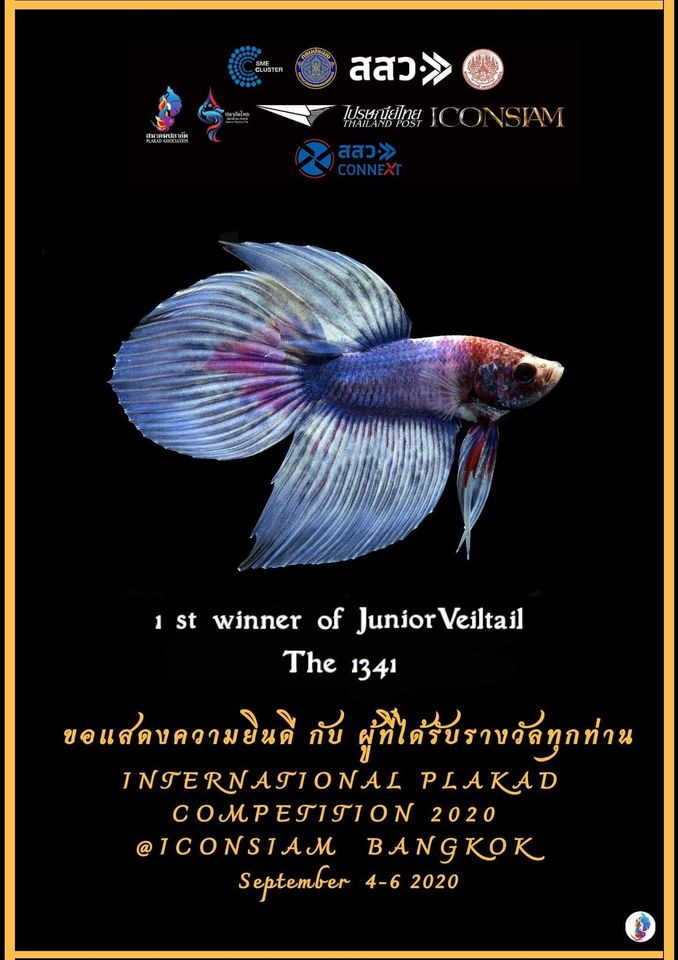 1st Winner of Junior Veiltail