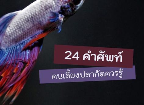 24 คำศัพท์คนเลี้ยงปลากัดควรรู้