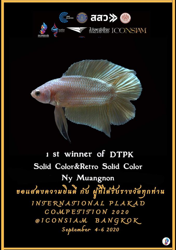 1st Winner of DTPK Solid Color & Retro Solid Color