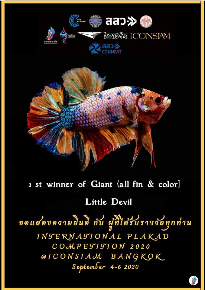 1st Winner of Giant [All fin & Color]