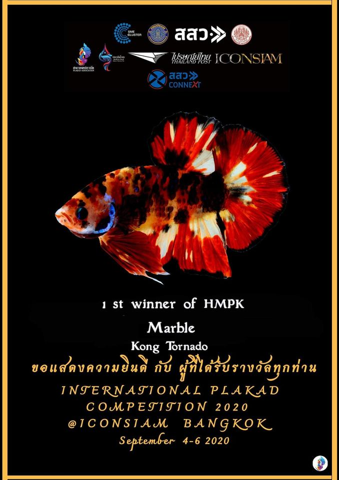 1st Winner of HMPK Marble
