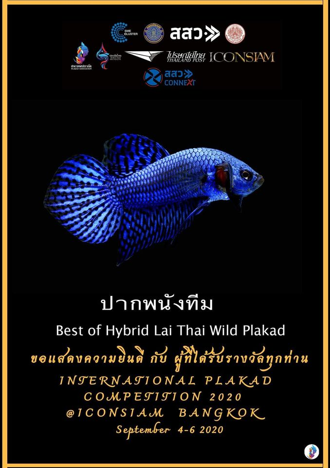 Best of Hybrid Lai Thai Wild Plakad