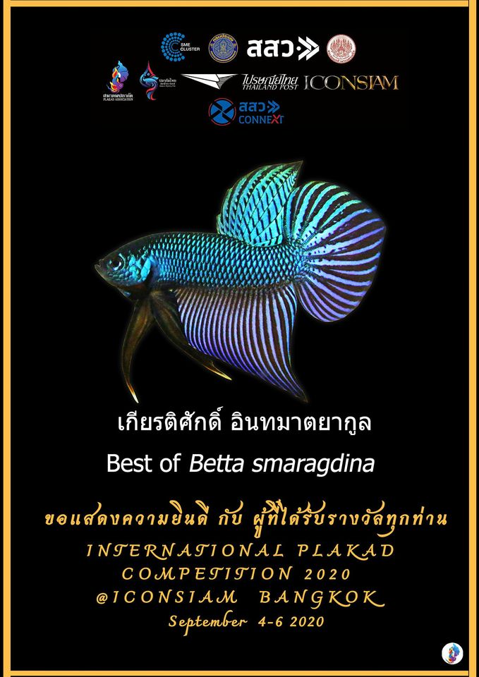 Best of Betta Smaragdina