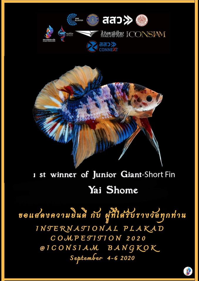 1st Winner of Junior Giant-Short Fin