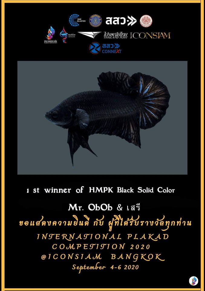 1st Winner of HMPK Black Solid Color
