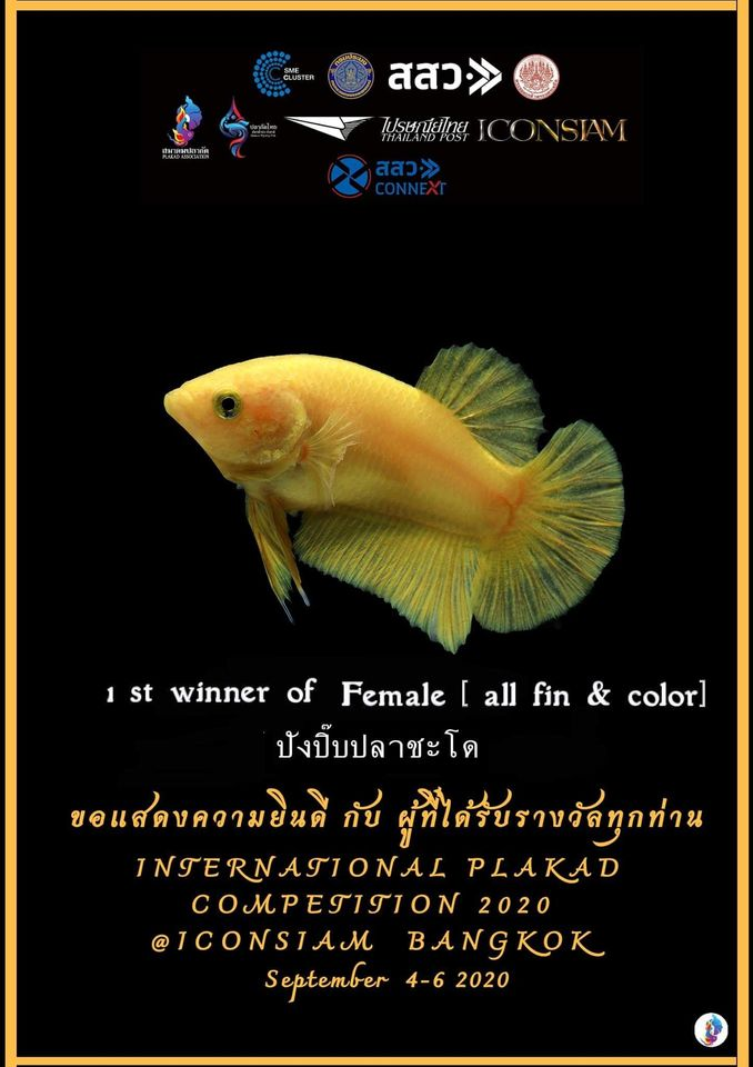 1st Winner of Female [All fin & Color]