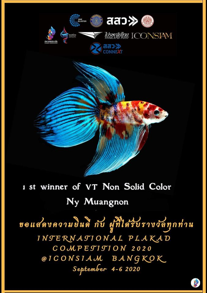 1st Winner of VT Non Solid Color