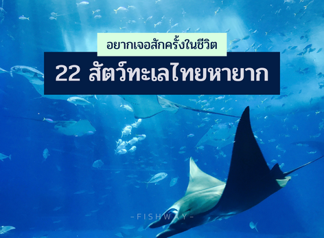 """""""22 สัตว์ทะเลไทยหายาก"""" อยากเจอสักครั้งในชีวิต"""