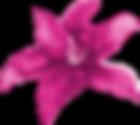 Bella_Jewel_Flower.png