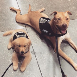 Claymore and Pluto at Home Depot