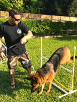 Team Training at Paws 4 Liberty