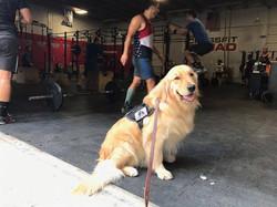 Ezra wanting to workout!