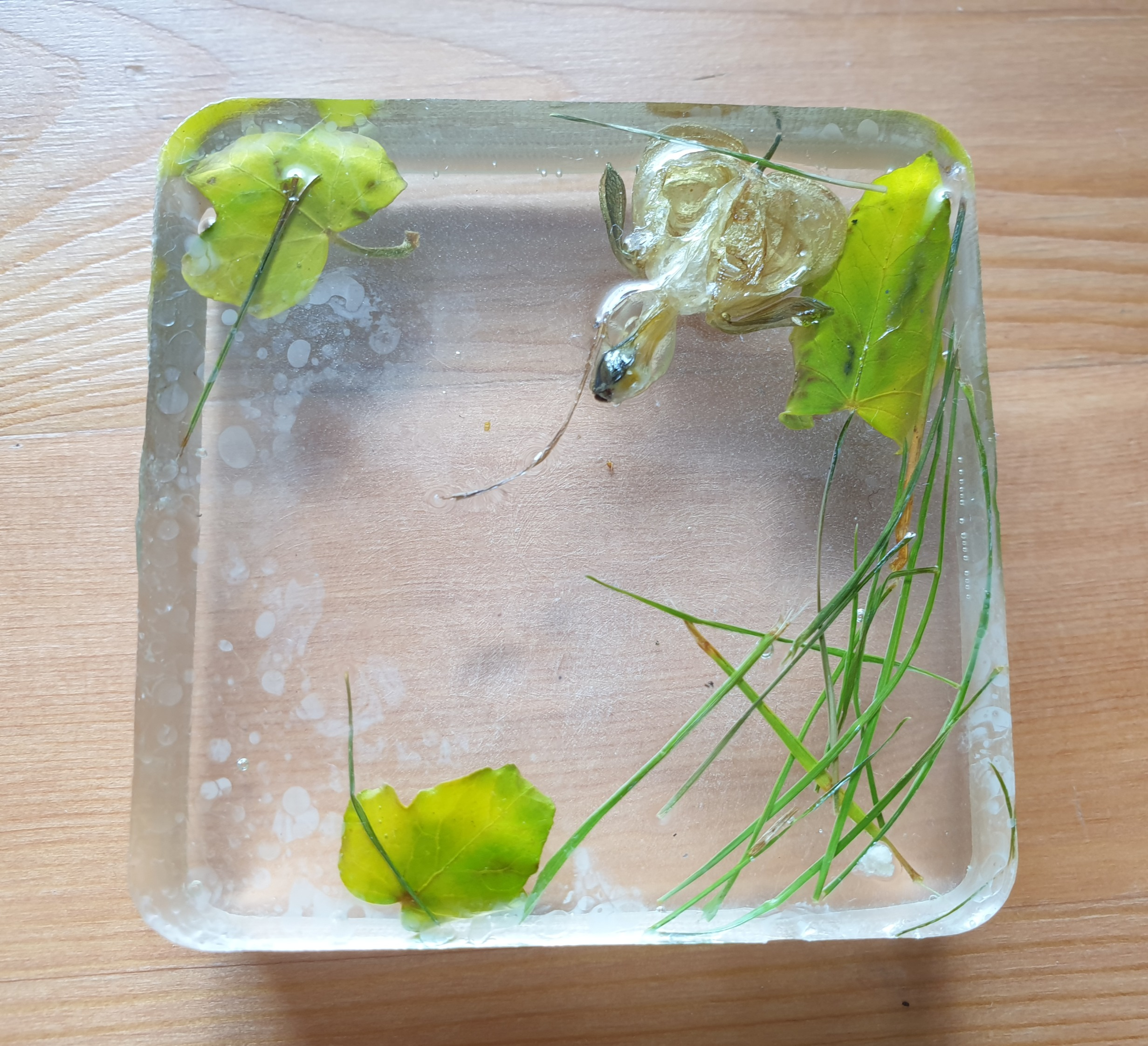 Holding and Containing (2020) - Resin and plants/weeds by Janine Moffat