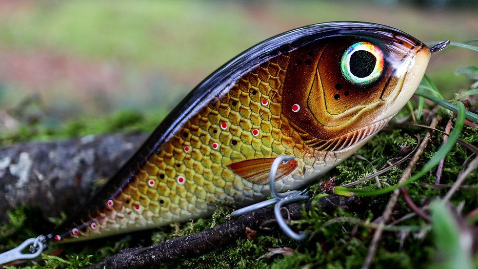 Piranha - Brown Trout