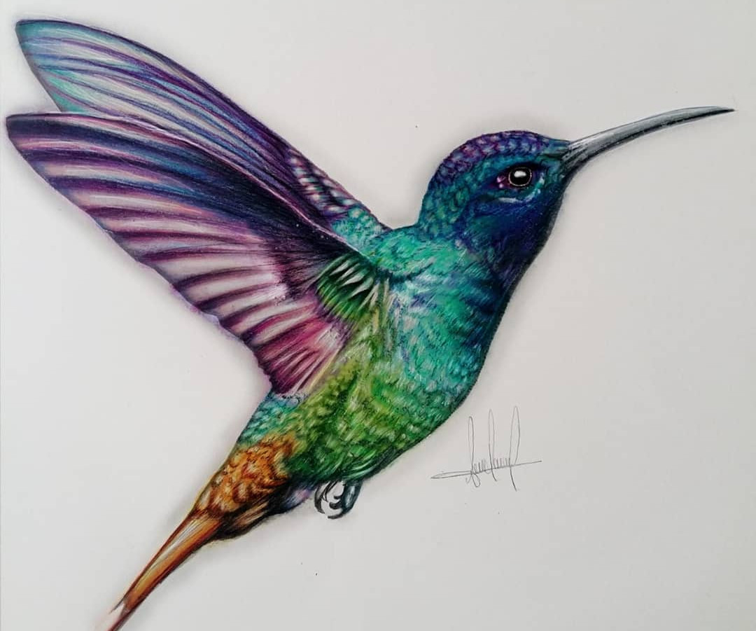 Humbing Bird
