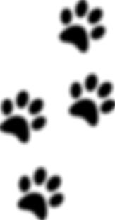 Bosco's pet care