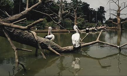 Дендрологический парк. Шеквитили Грузия.