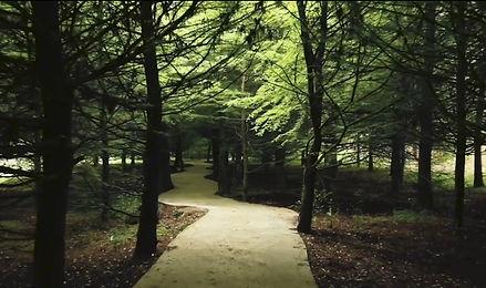 Дендрологический парк.Шеквитили.jpg