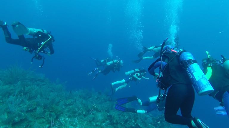Cours d'accompagnateur plongée adapté