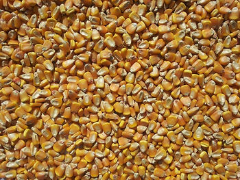 This is an image of Whole Maize
